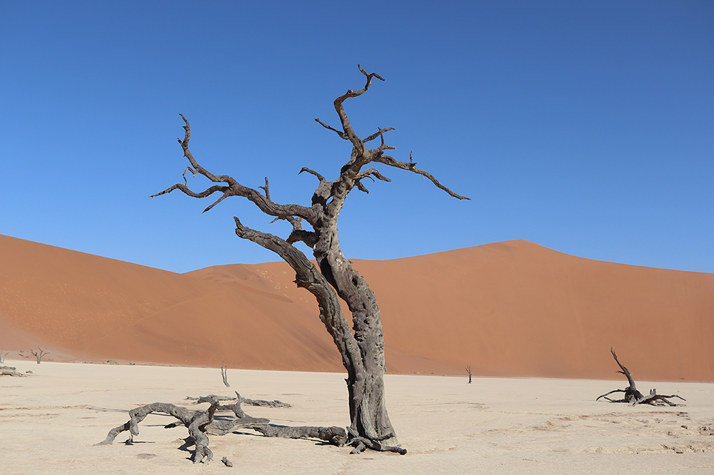 Trees in the Deadvlei valley